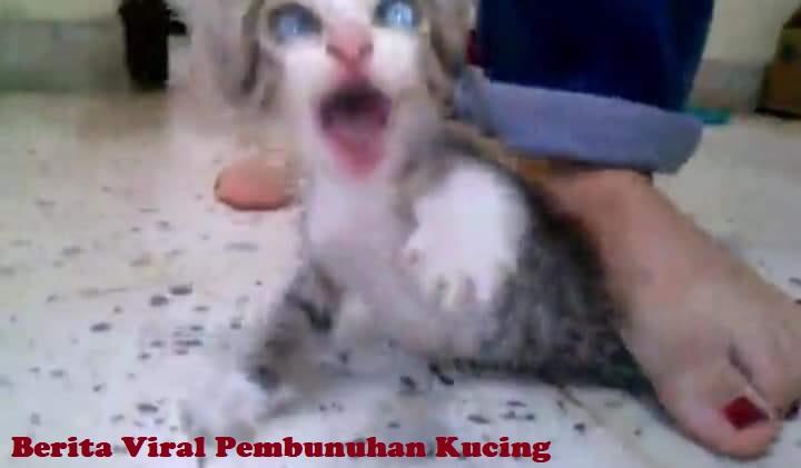 Berita Viral Pembunuhan Kucing